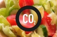 ทานอาหารมังสวิรัติ ช่วยลดการปล่อยก๊าซคาร์บอนไดออกไซด์ลง 50%