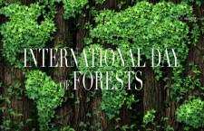 วันป่าไม้โลก  2564