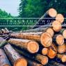 ไอเอสโอเตรียมร่างมาตรฐานสอบกลับแหล่งป่าไม้ยั่งยืน