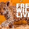ร่วมอนุรักษ์สัตว์ป่าเนื่องในวันสิ่งแวดล้อมโลก