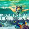 โลกต้องเร่งหยุดภาวะโลกร้อนเพื่อรักษาแนวปะการัง